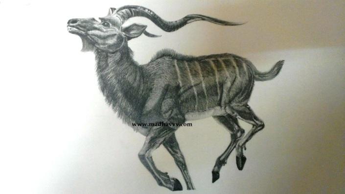 Shruthi-Antelope